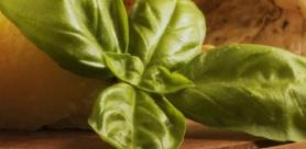 Как правильно солить базилик?